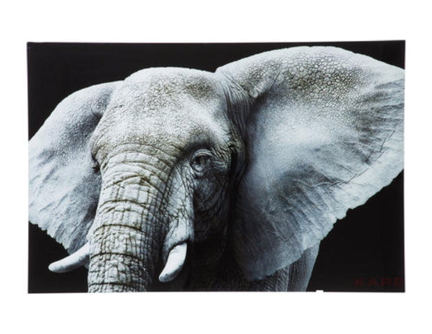 Bild Glas Face Elefant