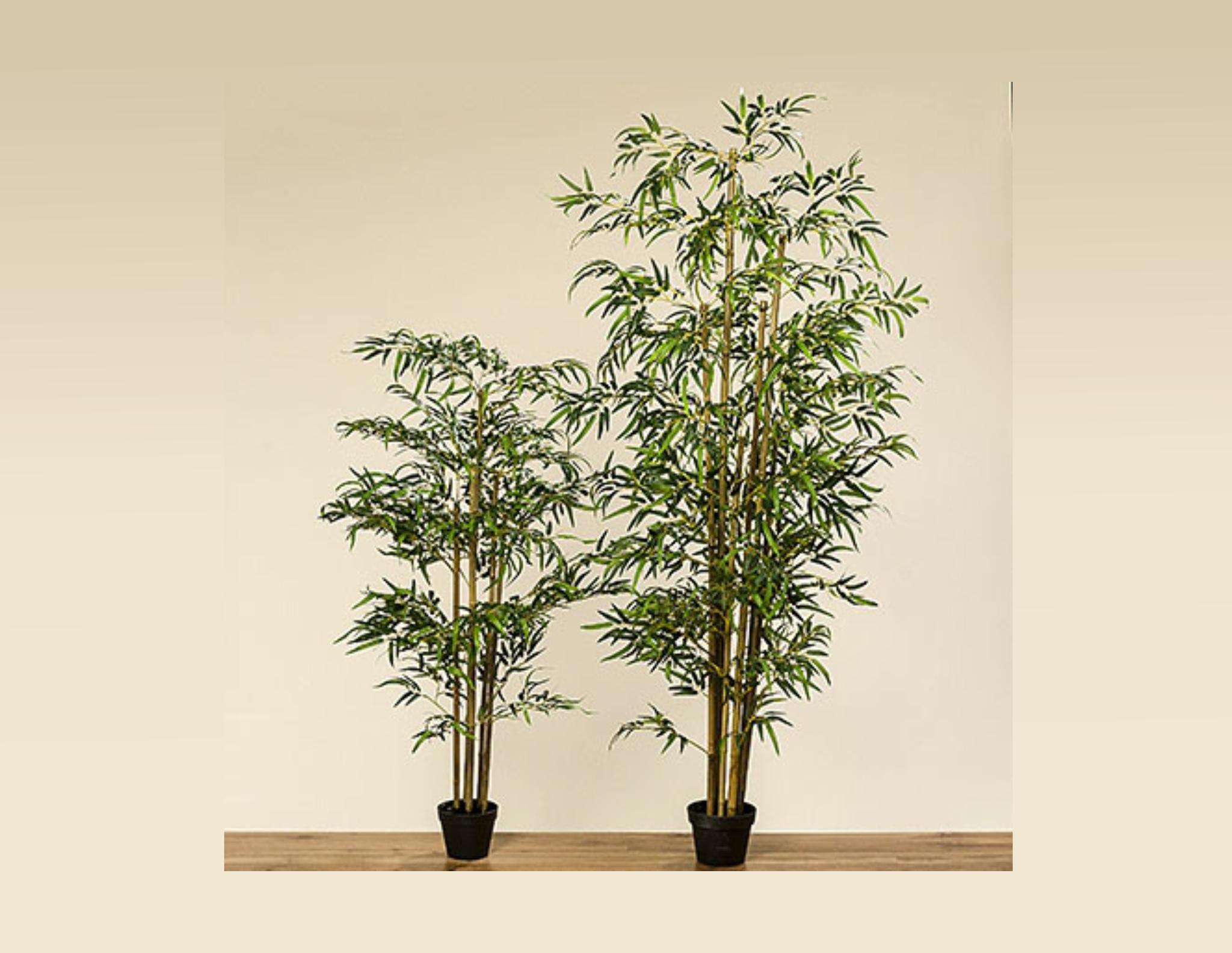 Bambus Im Topf Online Gunstig Kaufen Online Bei Discomoebel Shop